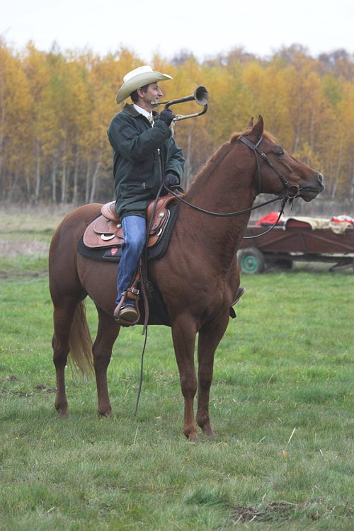 Bajki o koniach online dating